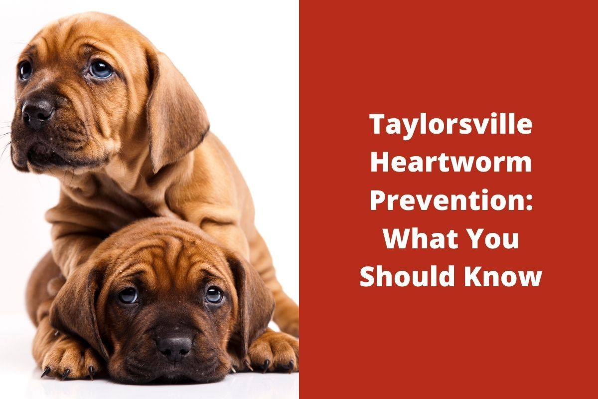 Taylorsville-Heartworm-Prevention_-What-You-Should-Know