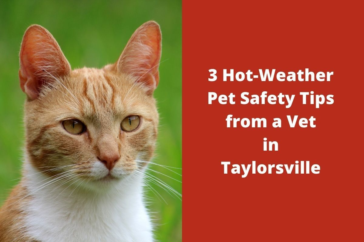 3-Hot-Weather-Pet-Safety-Tips-from-a-Vet-in-Taylorsville