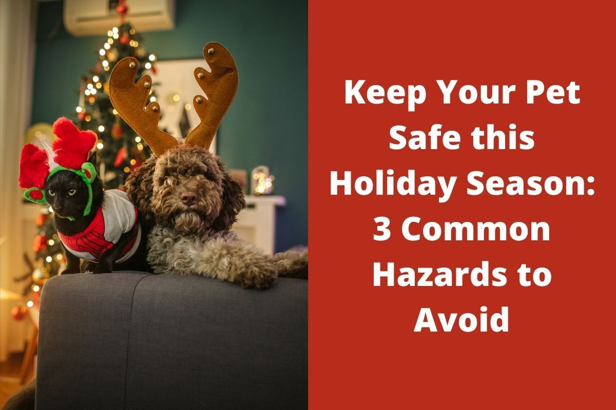Keep Your Pet Safe this Holiday Season: 3 Common Hazards to Avoid